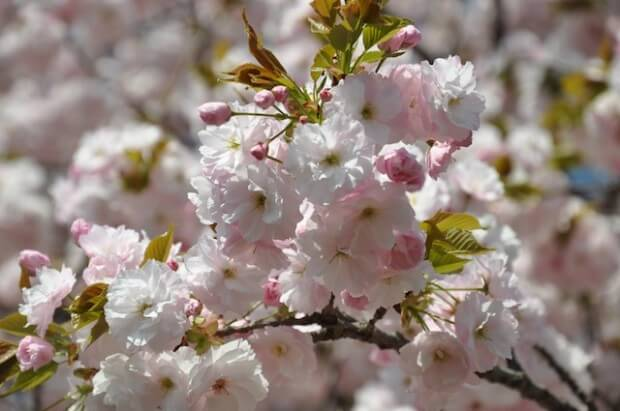 キャプション/やっぱりお花見って特別! ウキウキします