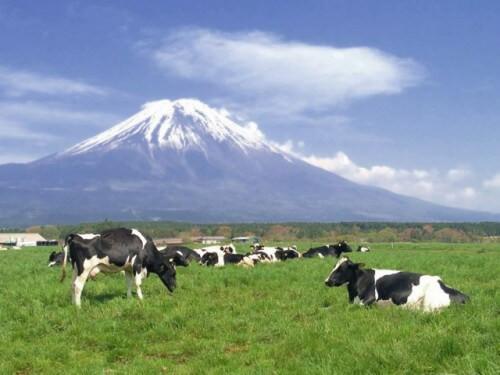 ちなみに、「富士芝桜まつり」への道中には、こんなのどかな風景も(2013年撮影)。