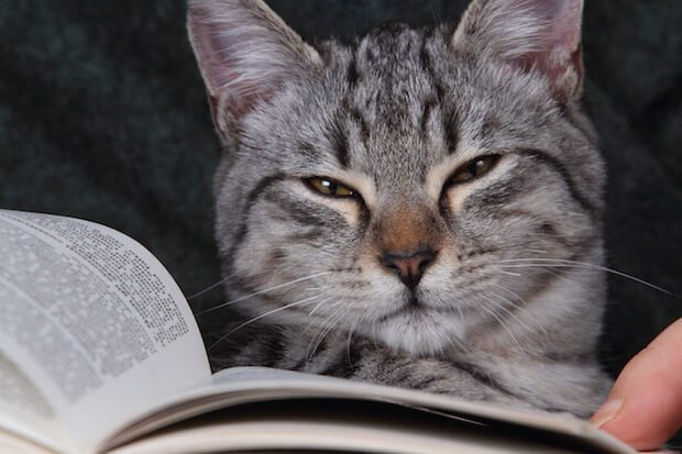 cat reading a book on her arms