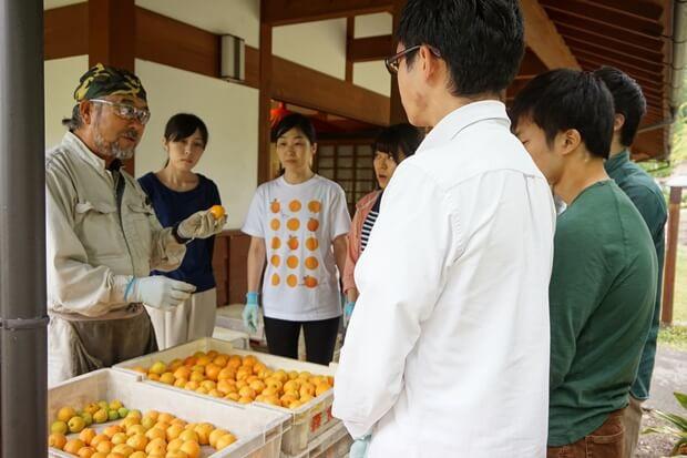 KIRINコラボバイト_「杏露酒」のあんず収穫_17
