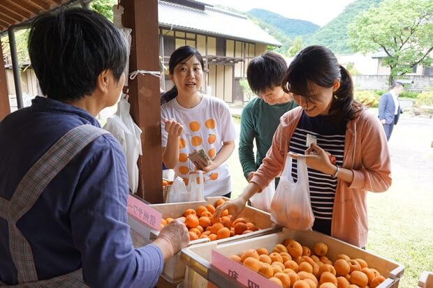 KIRINコラボバイト_「杏露酒」のあんず収穫_16