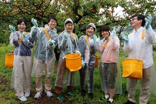 KIRINコラボバイト_「杏露酒」のあんず収穫_01