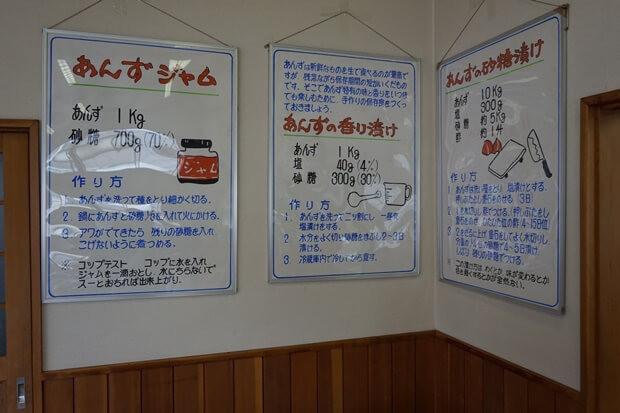 KIRINコラボバイト_「杏露酒」のあんず収穫_21