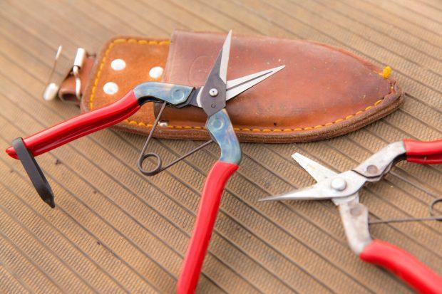 仕事道具の収穫バサミ。右は使いすぎて刃が折れてしまい現在、2代目ハサミを使用
