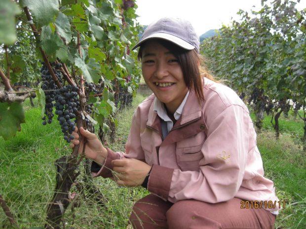 高野さんが働くブドウ畑「城の平ヴィンヤード」。収穫が終わり、今は畑を整える時期(写真提供:キリン株式会社)